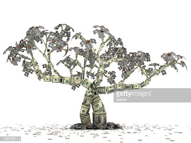 dollar money tree - money tree stock photos and pictures