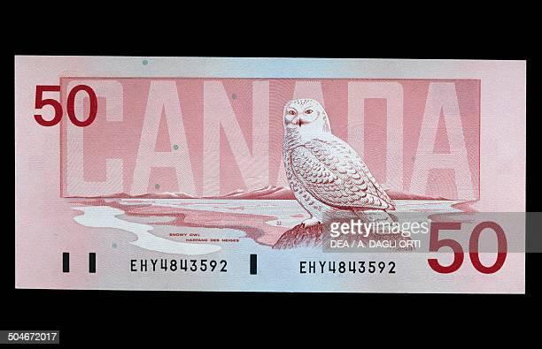 50 dollars banknote reverse Snowy Owl Canada 20th century