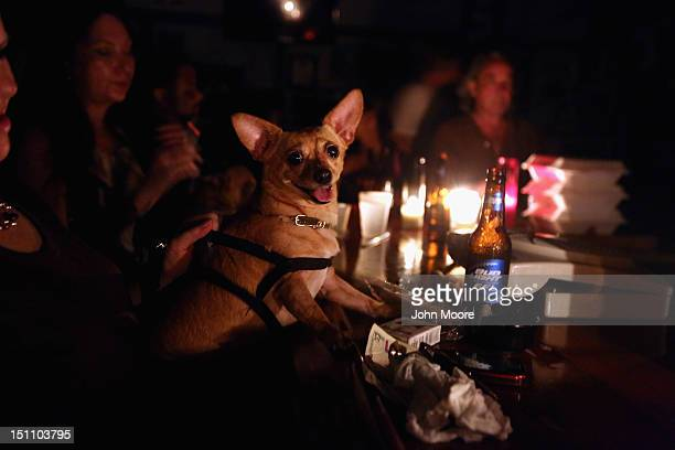 Dolly a twoyearold chiguagua leans on the bar as local residents drink by candle light at JJ's bar during the continued blackout on August 31 2012 in...