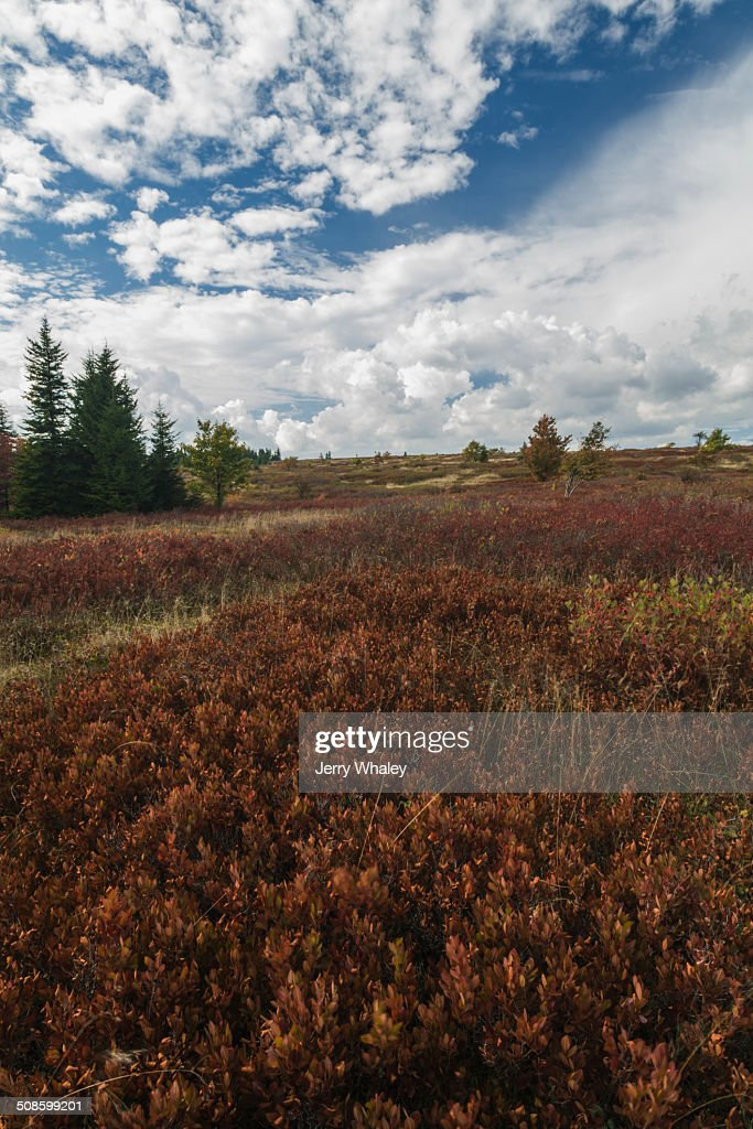 Dolly Sods, Autumn, WV : Stock Photo