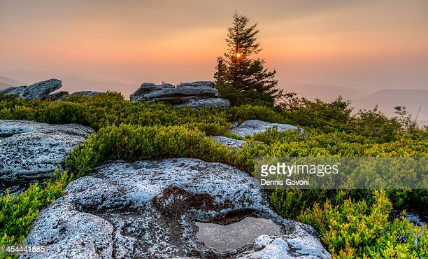 dolly sods sunrise at bear rocks - monongahela national forest stock photos and pictures