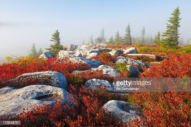 dolly sods wilderness fall scenic with fog - monongahela national forest stock photos and pictures