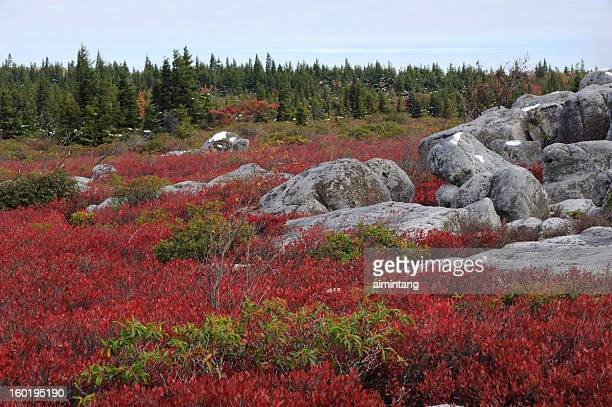 dolly sods wilderness in autumn - monongahela national forest stock photos and pictures