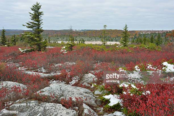 dolly sods wilderness in fall - monongahela national forest stock photos and pictures