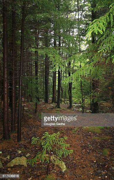 dolly sods wilderness, west virginia, usa - monongahela national forest stock photos and pictures