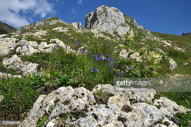 Dolomie outcrop and wild flowers