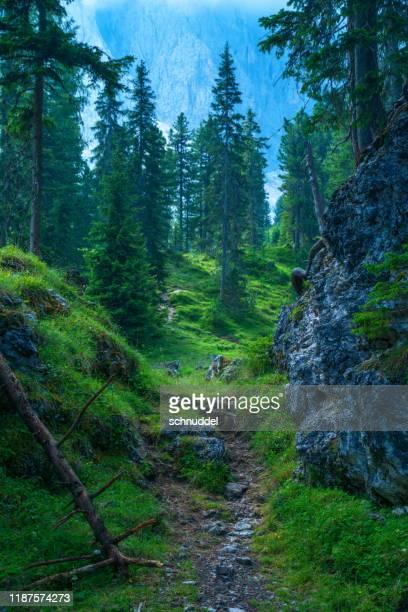 dolomites by villnöss geislerspitzen - pineta foto e immagini stock