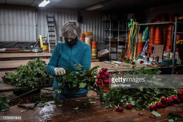 Dolors Albert wearing a face mask prepares roses to be sold online at the rose plant nursery Flors Pons on April 22, 2020 in Santa Susanna, near...