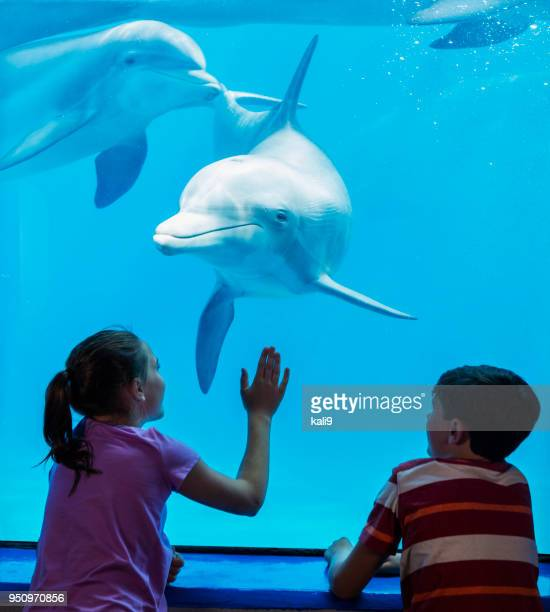 dolphin and children watching each other - zoo stock pictures, royalty-free photos & images