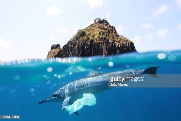 dolphin and plastic bag - pollution stock pictures, royalty-free photos & images