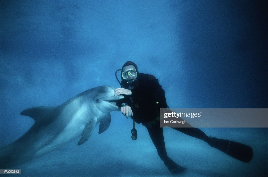 Dolphin And Scuba Diver Stock Photo - Getty Images
