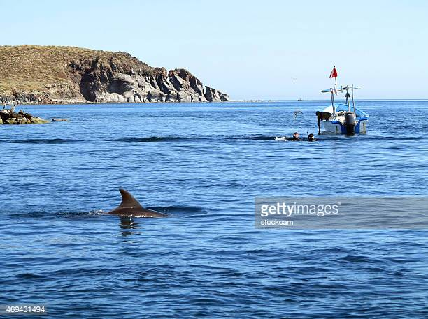 dolphin and scuba divers in mexico - sea of cortez stock pictures, royalty-free photos & images