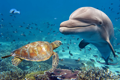dolphin and turtle underwater on reef 507626486