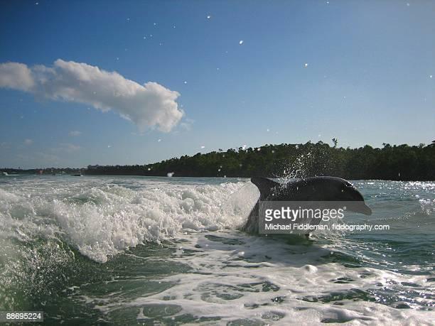 Dolphin Escort Leaps Alongside Boat