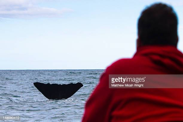 A dolphin expidition boat spots a whale along their path in Kaikoura