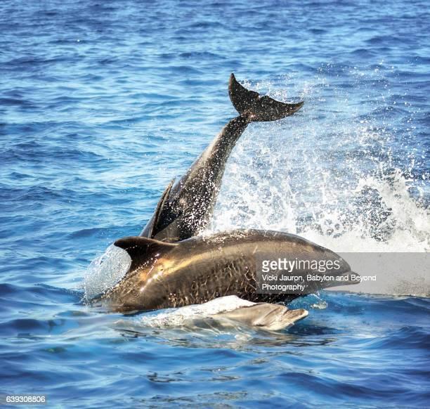 Dolphin Family Swim at Newport Beach, California