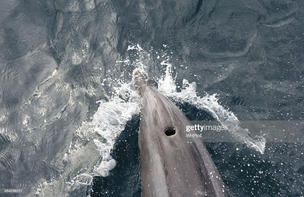 Dolphin foam : Stock Photo