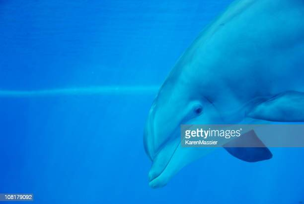Dolphin Headshot