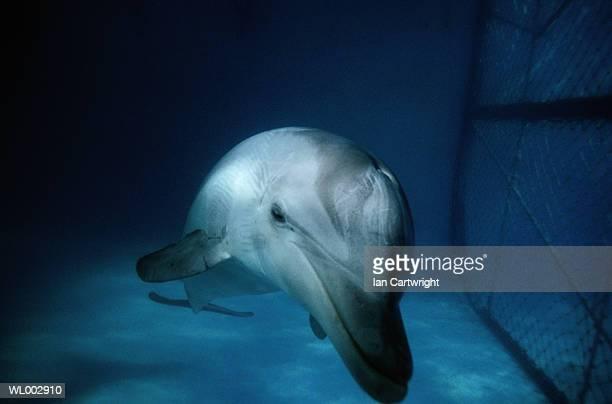 dolphin in captivity - animales en cautiverio fotografías e imágenes de stock