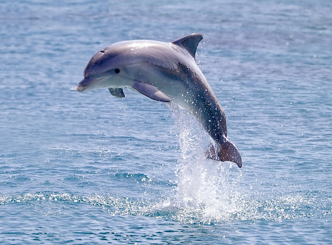 dolphin jump out of the water in sea 94323862