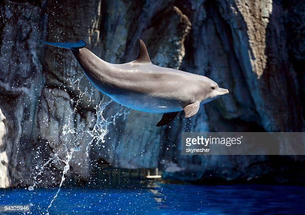 ドルフィンの間の水。