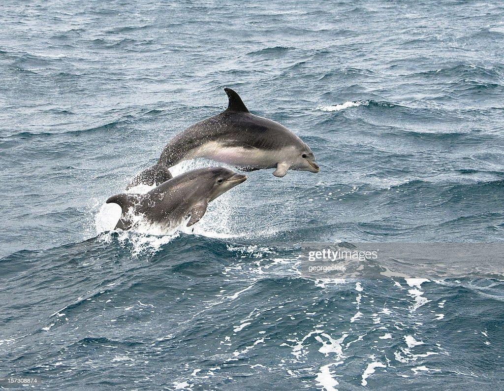 Dolphin Jump : Stock Photo