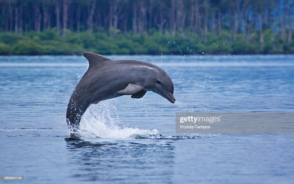 Dolphin jump up the water : Stock Photo