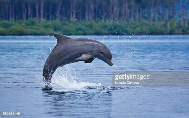 Dolphin jump up the water