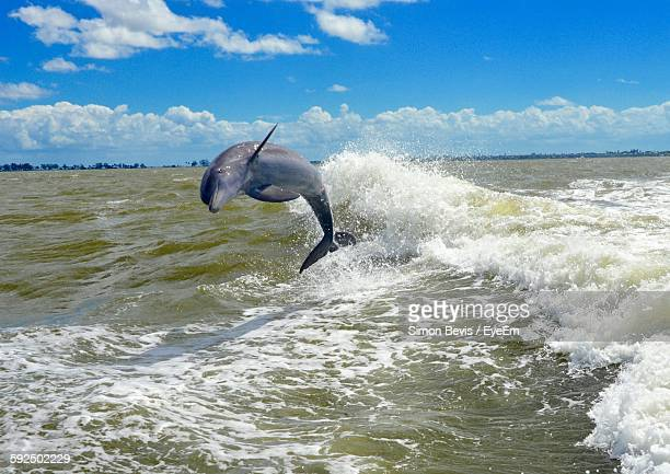 Dolphin Jumping In Sea Against Sky