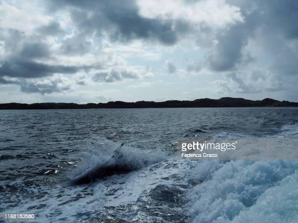 dolphin jumping in the wake of a boat, hebrides islands, scotland - hebriden inselgruppe stock-fotos und bilder