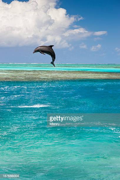 Dolphin Jumping In Turquoise Lagoon Pacific Islands