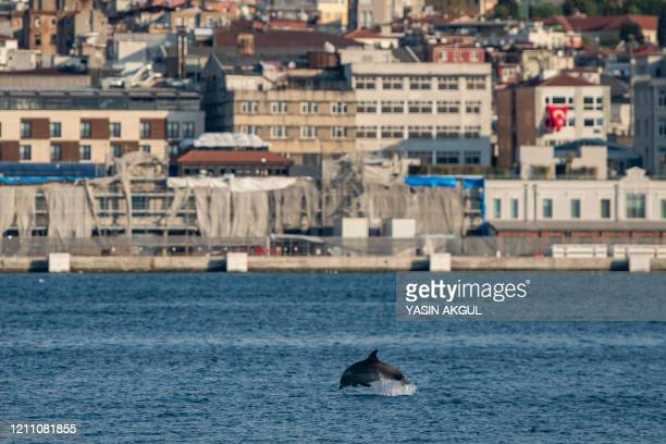 Dolphin jumps in the Bosphorus strait, where sea traffic has nearly come to a halt on April 26, 2020 in Istanbul, as the city of 16 million has been...