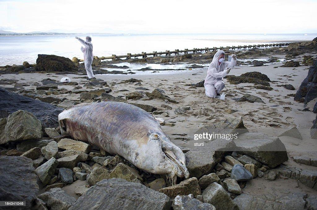 dolphin murder scene : Stock Photo