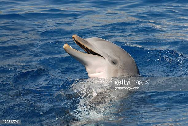 Dolphin smiling with closed eyes