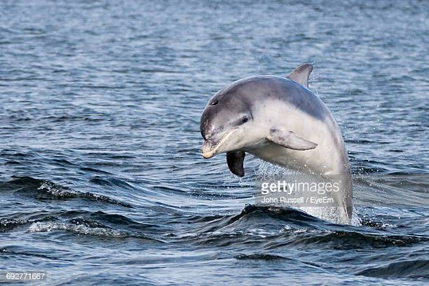 dolphin swimming in sea - dauphin photos et images de collection