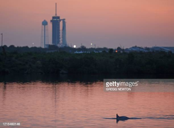 A dolphin swims in the lagoon near launch pad 39A shortly before sunrise on launch day at the Kennedy Space Center in Florida on May 27 2020 NASA...