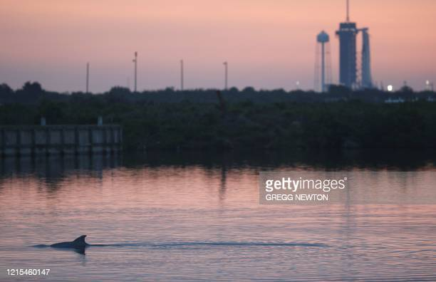 TOPSHOT A dolphin swims in the lagoon near launch pad 39A shortly before sunrise on launch day at the Kennedy Space Center in Florida on May 27 2020...
