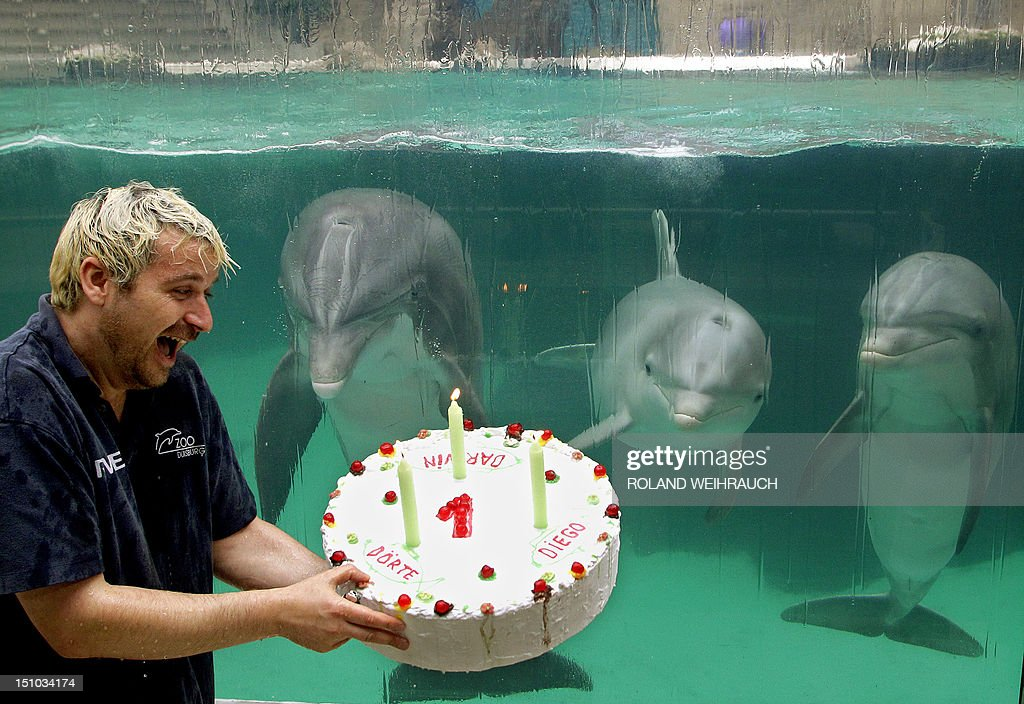 Swell Dolphin Trainer Thomas Lange Holds A Birthday Cake For The Young Funny Birthday Cards Online Alyptdamsfinfo