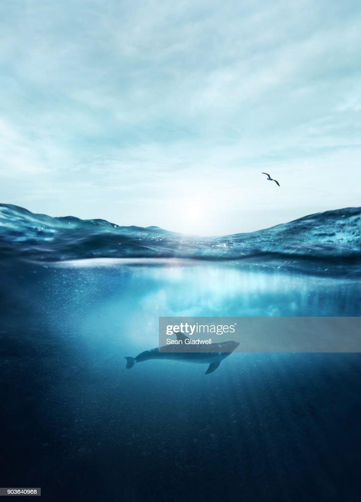 Dolphin underwater : Stock Photo