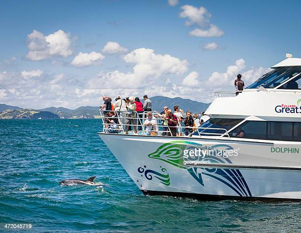 Dolphin Watching Cruise in New Zealand