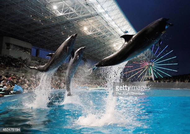 Dolphines jump during the night aquarium event at Port of Nagoya Public Aquarium on July 19 2014 in Nagoya Aichi Japan