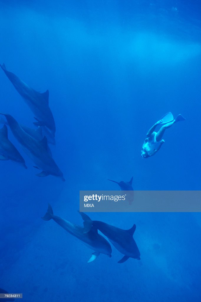 Dolphins and a diver underwater : Stock Photo