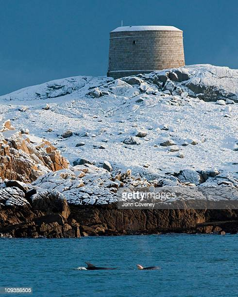 dolphins at a snowy dalkey island - dalkey stock pictures, royalty-free photos & images
