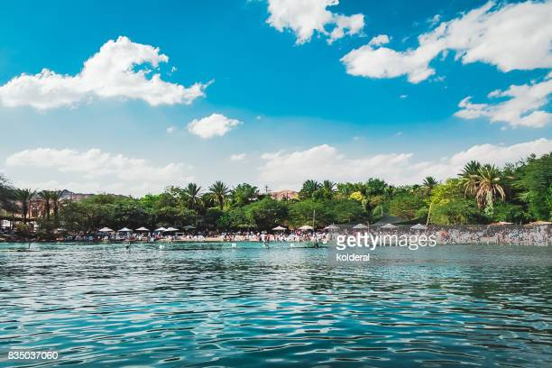 dolphins beach in eilat - eilat stock pictures, royalty-free photos & images