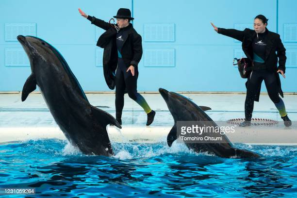 Dolphins jump in front of trainers during a training session for employees held ahead of the reopening of the Hakkeijima Sea Paradise theme park on...