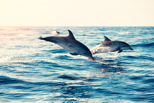 Dolphins Jumping From The Sea 869243054