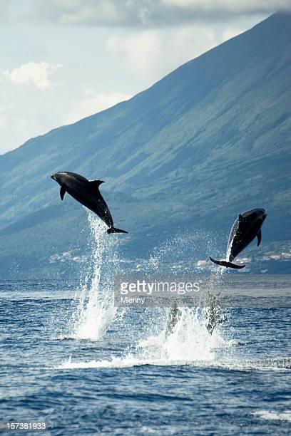 Dolphins jumping in the Wilderness