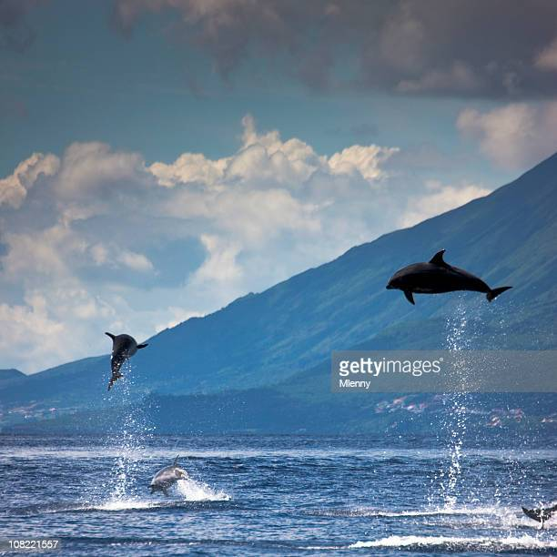 Dolphins Jumping into the Air