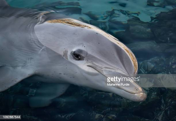 dolphins - dolphin stock pictures, royalty-free photos & images