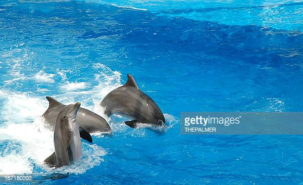 dolphins show off - orlando florida stock photos and pictures